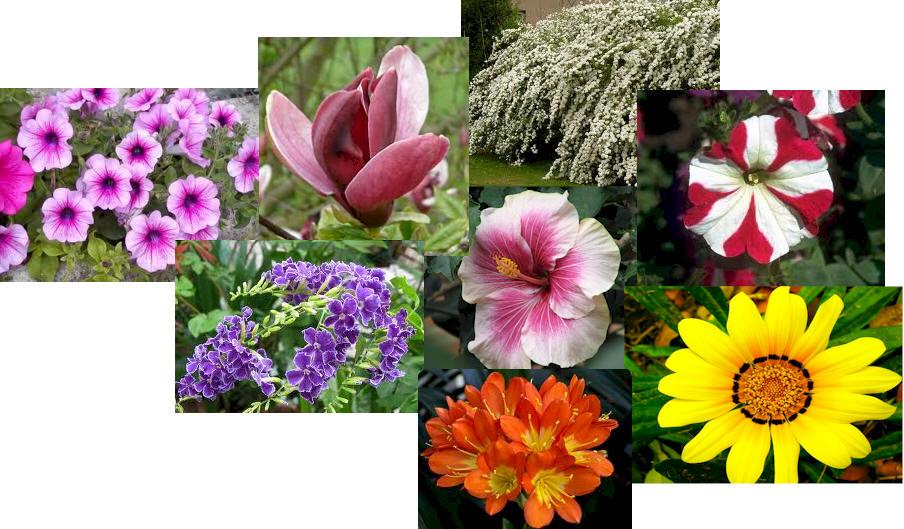 Jardines dise o y mantenimiento flores de estaci n y - Disenar jardin online ...